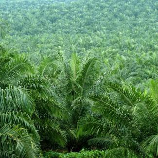 New approaches to sustainable palm oil