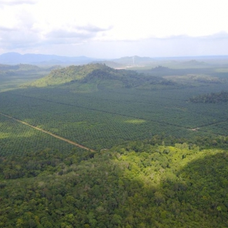2019 06 06 Village forests in an oil palm landscape: can they co-exist