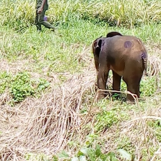2019 10 07 Okomu's workers rescued a baby elephant