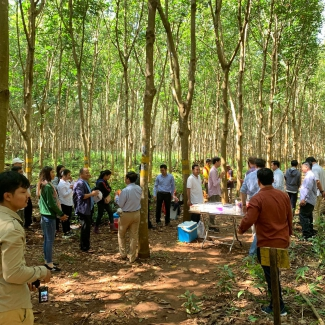 2019 11 26 Visit of the General Directorate of  Rubber at Socfin Cambodia
